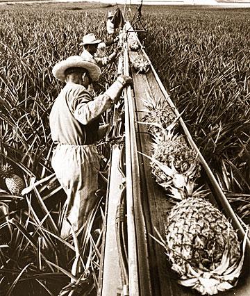 Filipino Plantation Workers