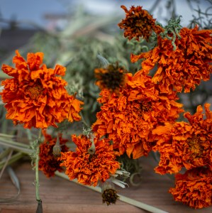 Marigold flowers on the table.