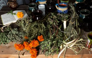 Branches of dry mint, marigold, Lemongrass, and Licorice, several clay cups and an open notebook on top of a wooden table at Friends of Brooke Park.