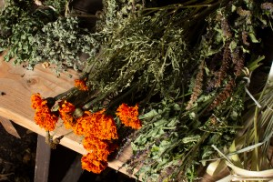 Dry Mint, Marigold, and Licorice. Brewing Memories, October 24, 2020. Photo by Cinthya Santos-Briones.
