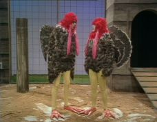 The last turkeys in the coop
