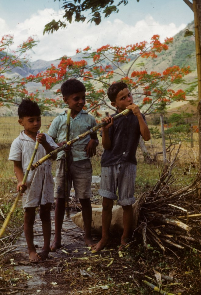 """""""Three boys chewing on sugarcane""""<br>Orpha Leatherman - Early 1950s"""