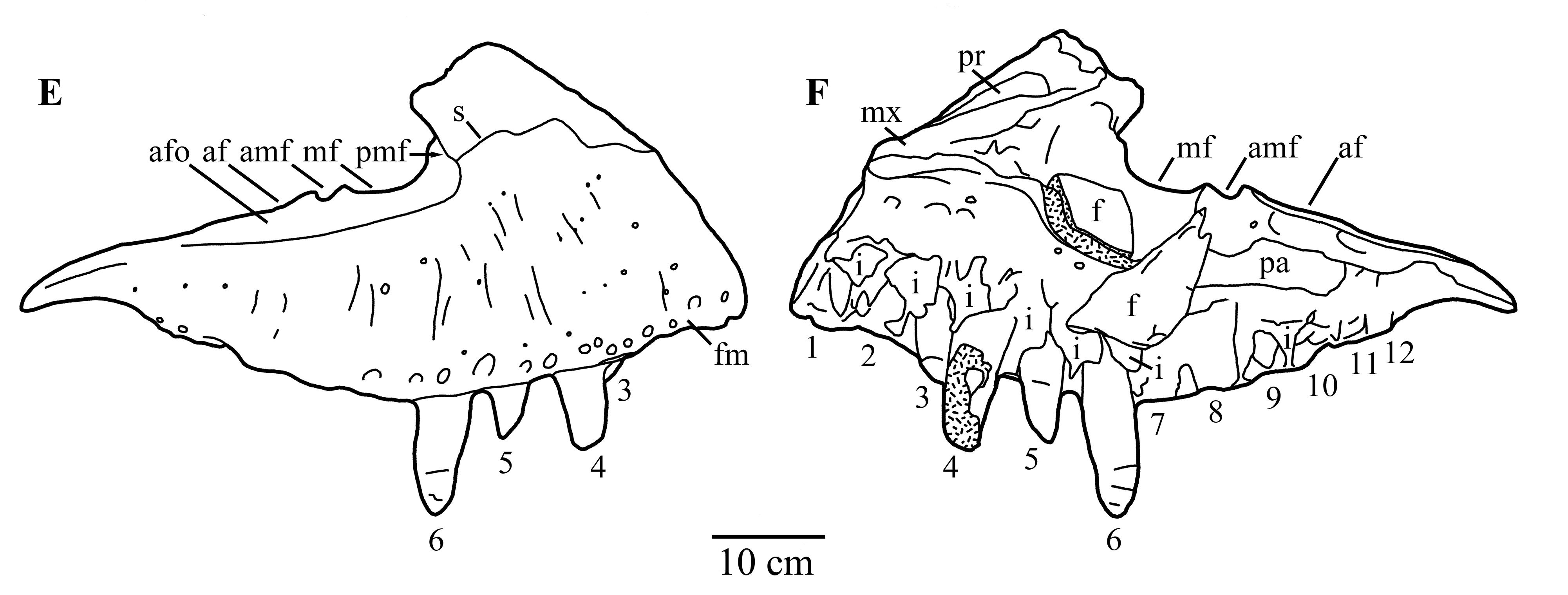 Notes On The Taxonomy And Identity Of Zhuchengtyrannus