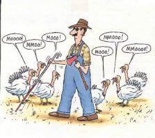 blind turkey
