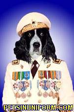 example_spaniel_dog_1