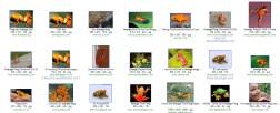 Orange Frog - no filter