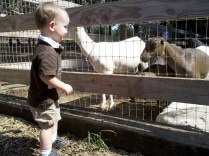 Apple Ridge Farms (7)