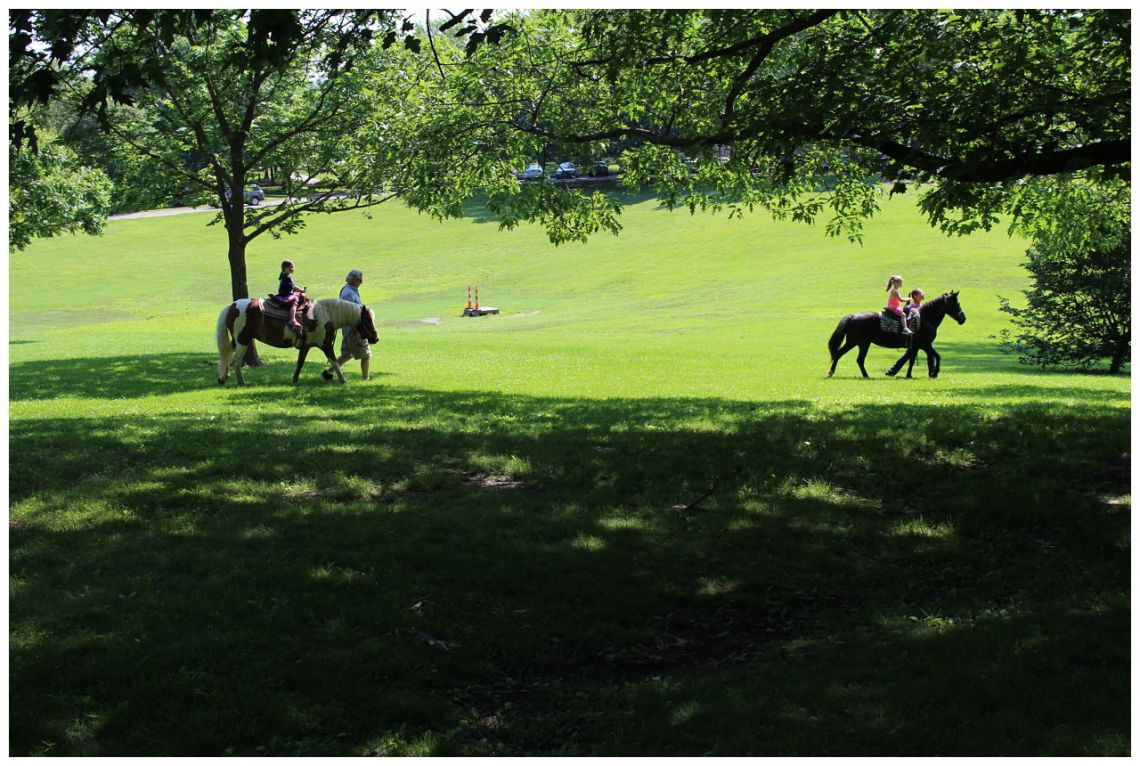 St. Louis Fragile X Walk - Pony Rides