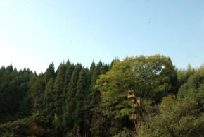 treehouse01