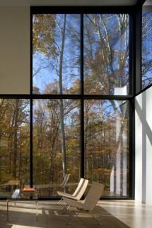 Forest Amazing Window Views