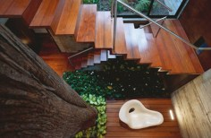 Elegant-Wooden-Stairs-Interior-on-Modern-House-Design-that-Interact-Directly-with-Trees-Corallo-House-in-Guatemala