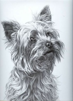 draw pencil easy things dog sketch background learn grey diy drawing hair archzine tutorial drawings sketches alive
