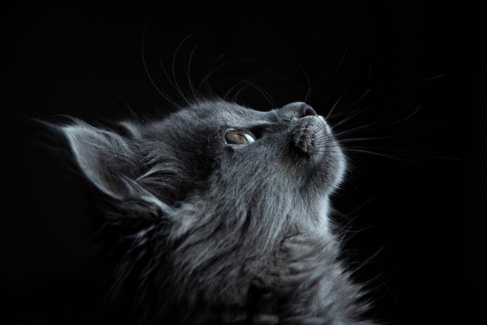 Zendha Black Cat Wallpaper Tumblr