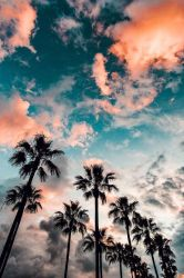 Aesthetic Iphone Wallpaper Wild Country Fine Arts