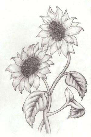 sunflower drawing pencil easy flowers simple draw rose drawings flower sketch sketches sunflowers background intertwined butterfly drawn blumen roses bleistiftzeichnungen