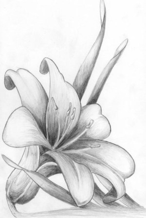 pencil easy draw flower flowers drawing sketch background drawings sketches tutorials rose simple close trace 1001 floral designs cool artwork