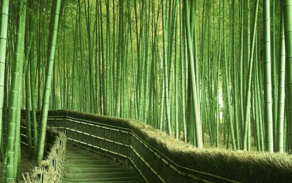 La Palissade Bambou Japonaise Confortable Et Pratique