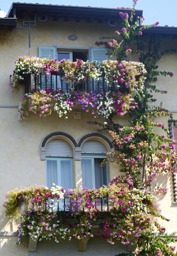 Des plantes grimpantes pour balcon et terrasse  on est toujours dans le jardin  Archzinefr