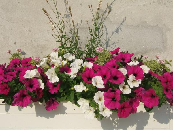 Choisir une plante pour jardinire  quelques ides et astuces