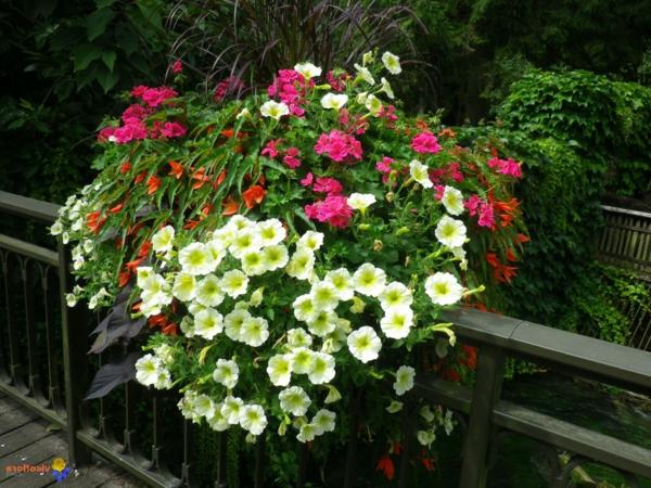 Choisir une plante pour jardinire  quelques ides et