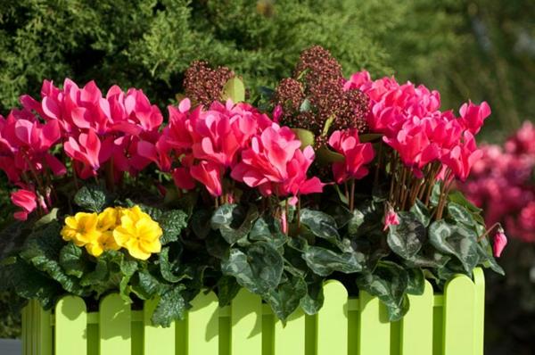 Choisir une plante pour jardinire  quelques ides et astuces  Archzinefr