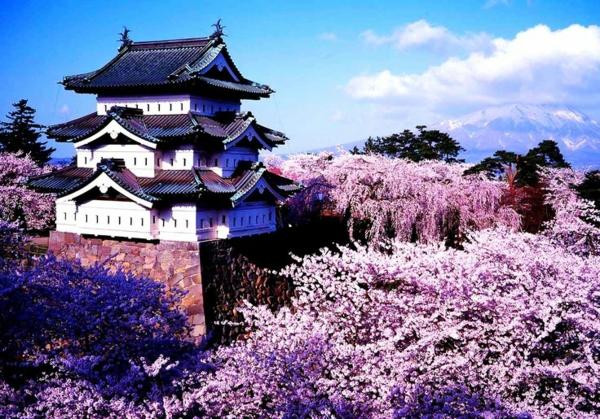Le Cerisier Japonais 85 Points De Vues