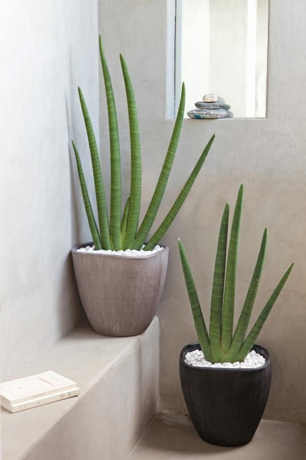 La plante verte dintrieur  Archzinefr