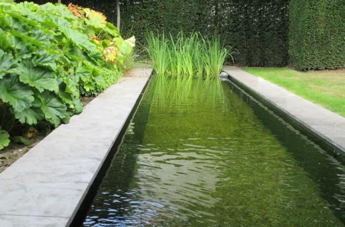 la piscine biologique une solution