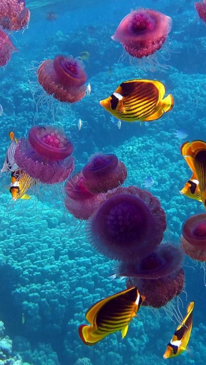 Cratures uniques qui habitent le fond marin