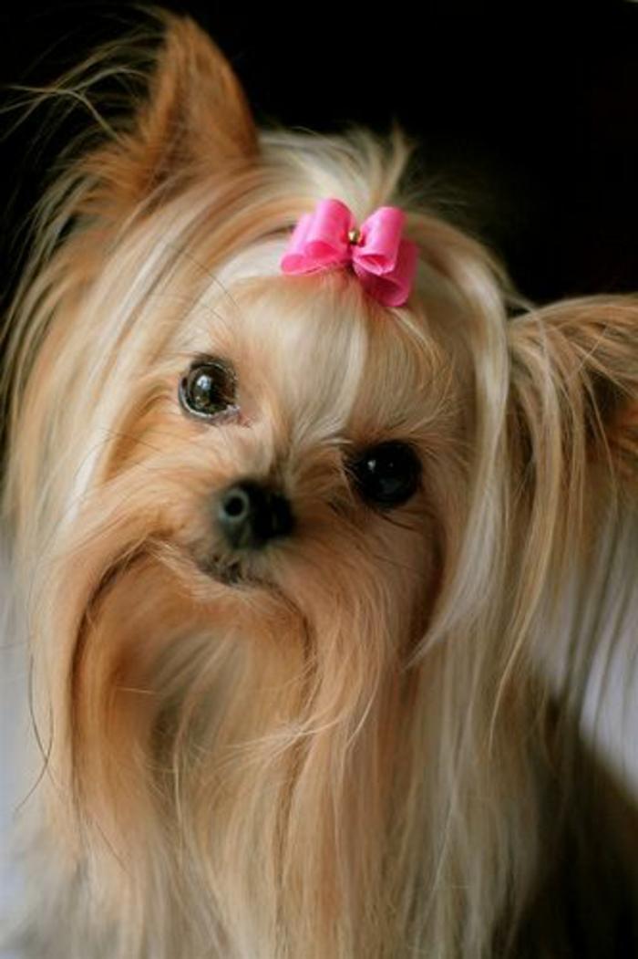 Comment choisir son chien Nos conseilles en 45 photos