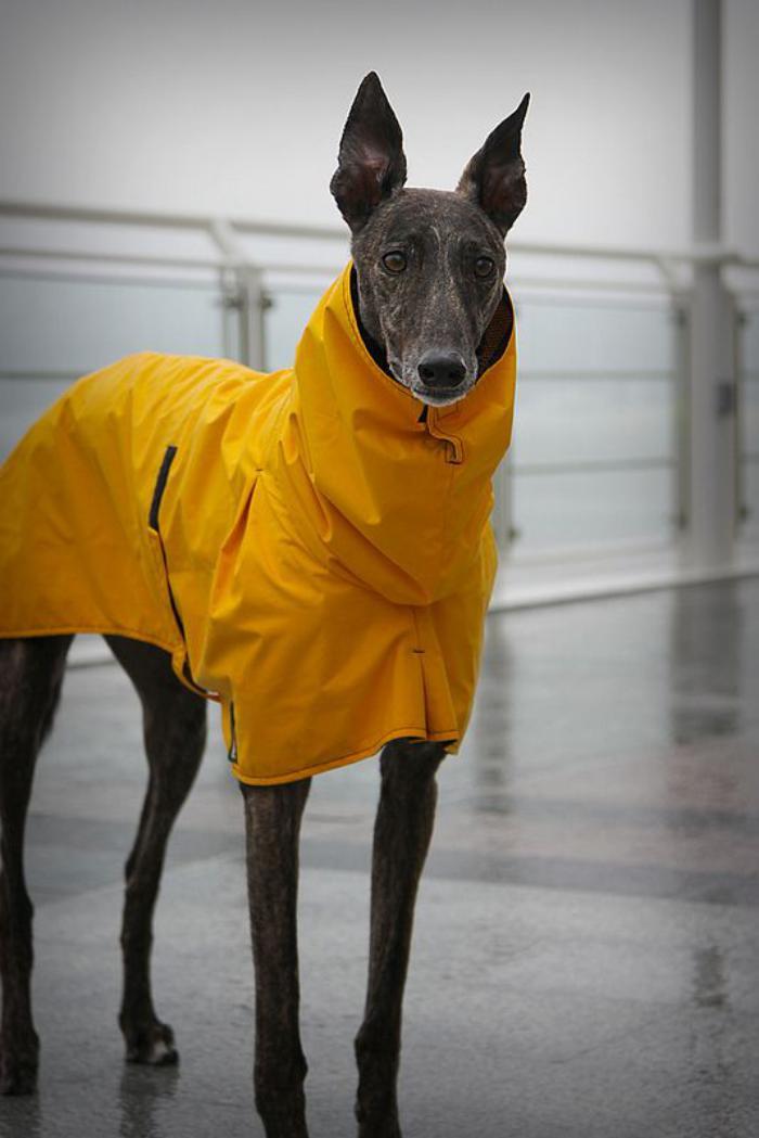 Quel manteau pour chien pour votre ami  quatre pattes