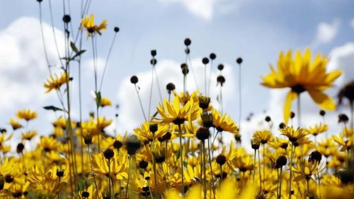Le plus beau paysage fleuri Voyez les meilleures images de la nature  Archzinefr