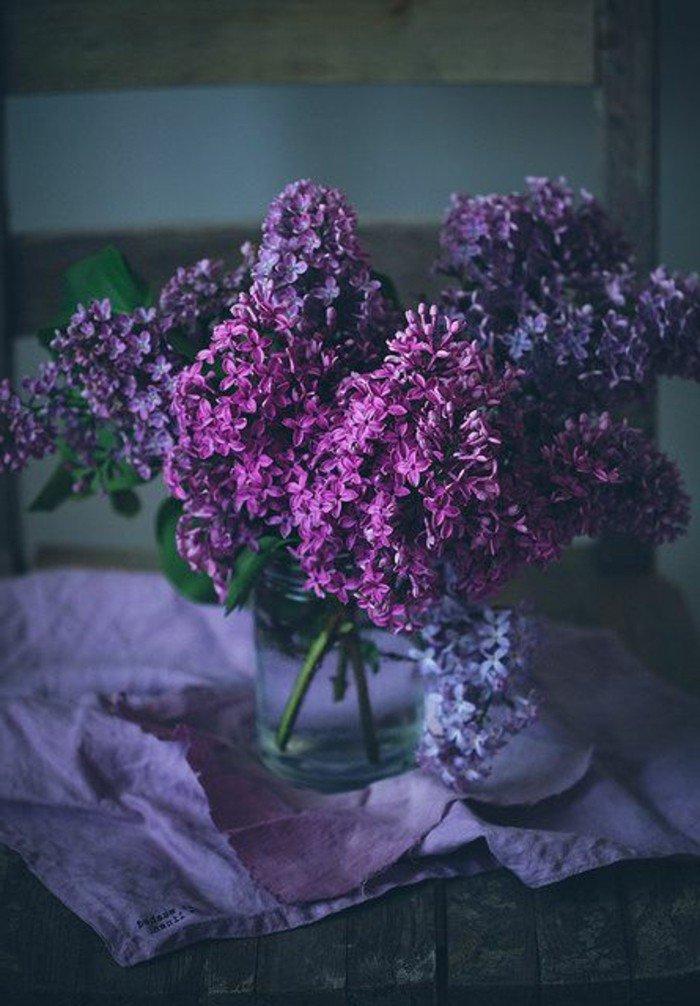 Les plus belles fleurs violettes en beaucoup dimages charmantes