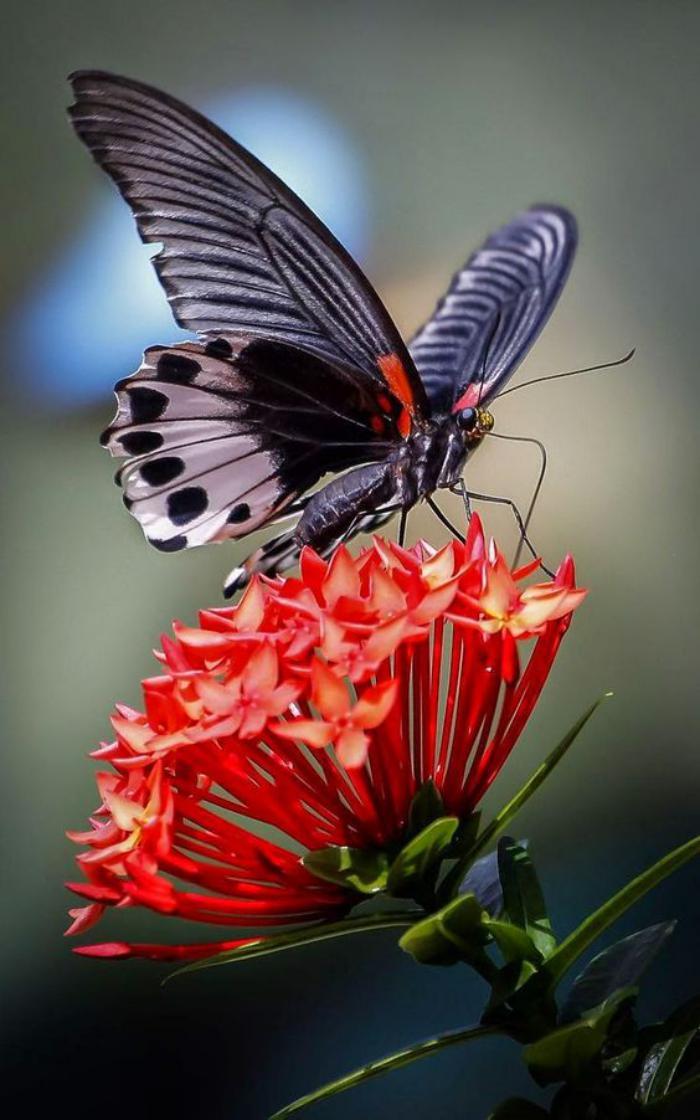 Animated Flower Wallpaper La Beaut 233 De La Plan 232 Te Jolies Photos De Papillons