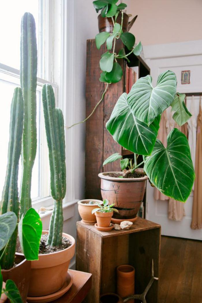 Dcorez avec les plantes grasses dintrieur
