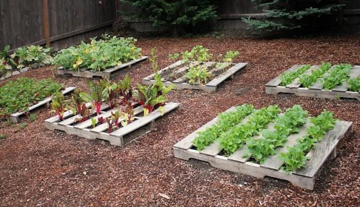 S Jardin Plantes Et Jardins Creer Un Carre Po Er Dans Son Jardin Conseils Et Idees En Photos