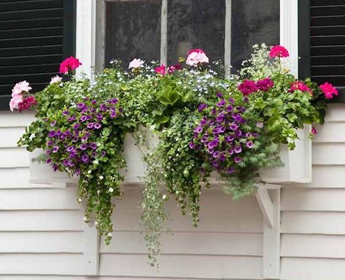 Plante retombante pour salle de bain fleurs retombantes pour jardinires fashion designs - Plante salle de bain sombre ...