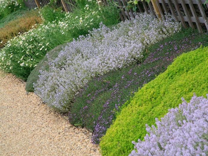 Plante COUVRE sol  un tableau de couleurs naturelles dans votre jardin  Archzinefr
