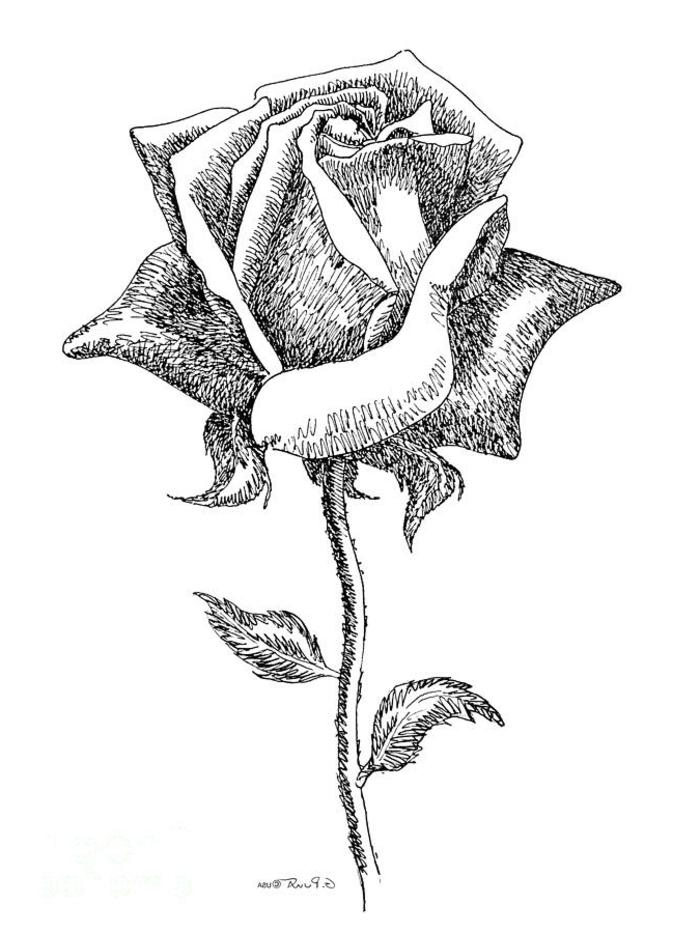 photos de dessin noir et blanc qui vont