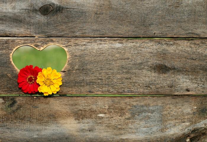 images pour un fond d ecran fleur magique