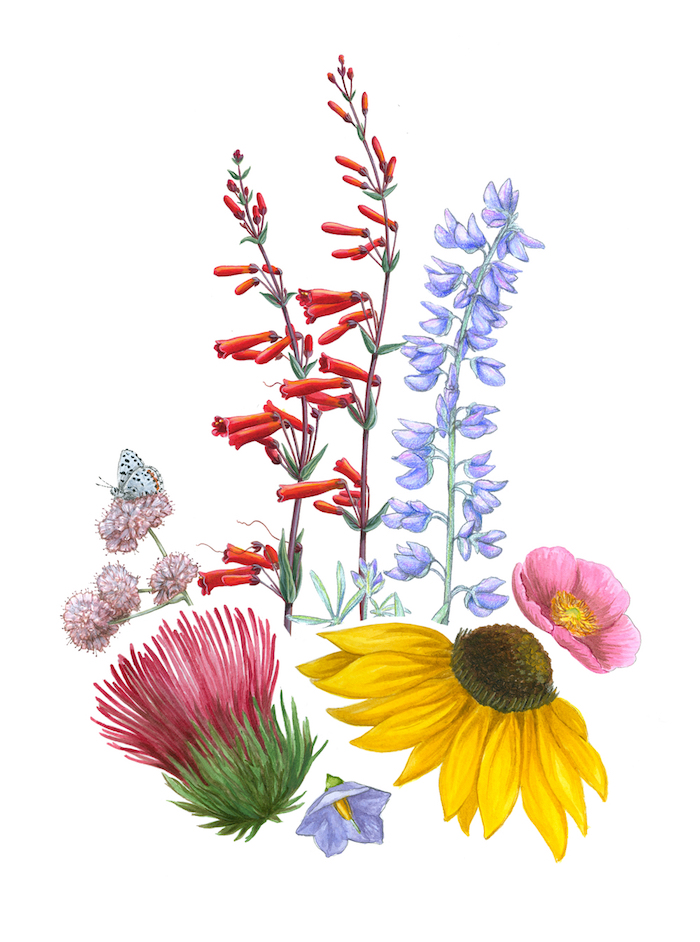 Comment Dessiner Une Belle Fleur Tattoos Ideas