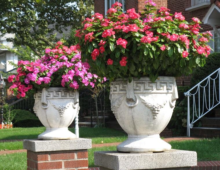 Piante da ombra guida completa per un giardino fiorito tutto lanno  Archzineit