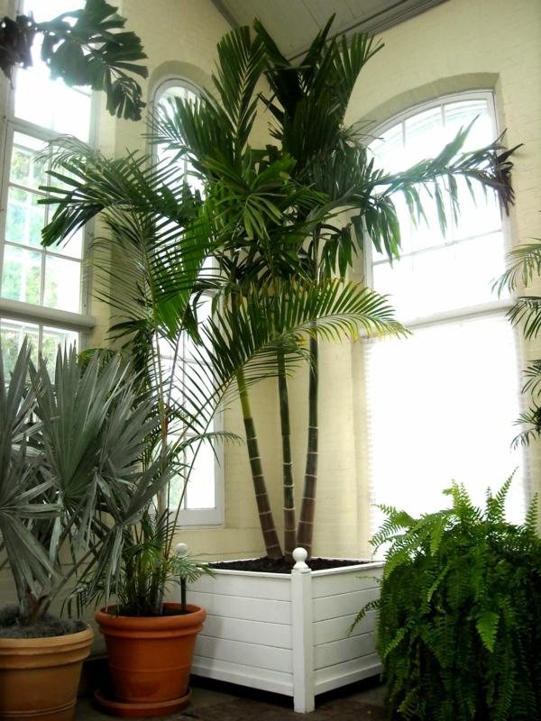 Palmenarten Zimmerpflanzen wirken sehr schn  Archzinenet