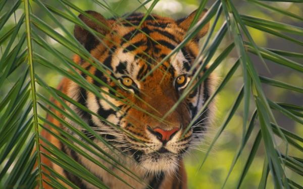 Schne Tierbilder  Teil 2 Mehr Inspiration fr Ihr Zu