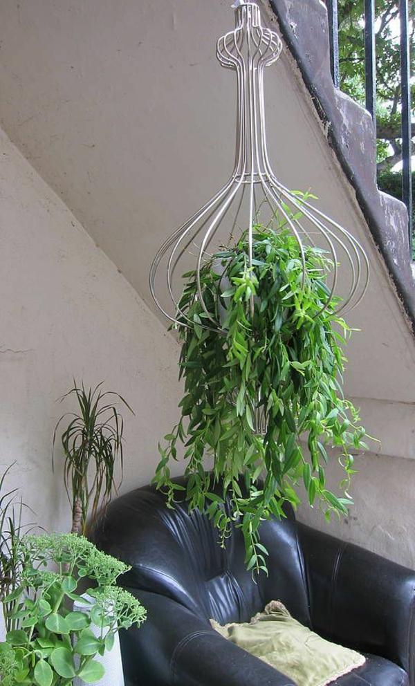 Hngende Zimmerpflanzen knnen die beste Hnge  Dekoration sein  Archzinenet