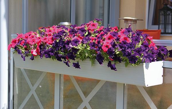 Blumenkasten fr Balkon  wunderschne Bilder