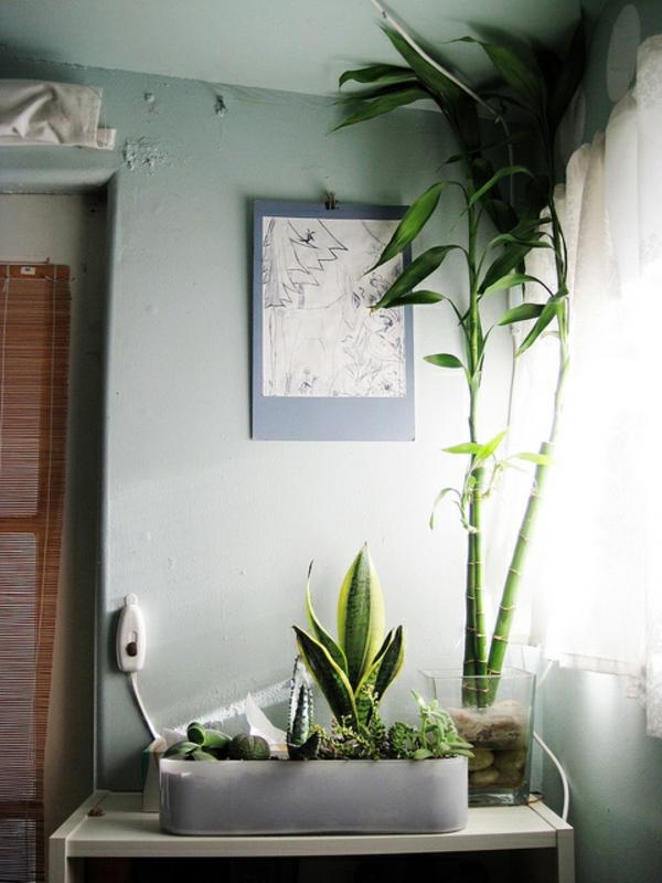 Pflanzen im Schlafzimmer Es lohnt sich fr sicher