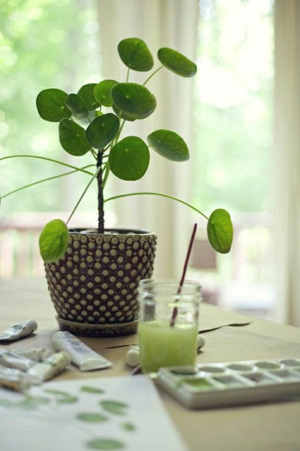 Zimmerpflanzen fr das perfekte Ambiente im Haus