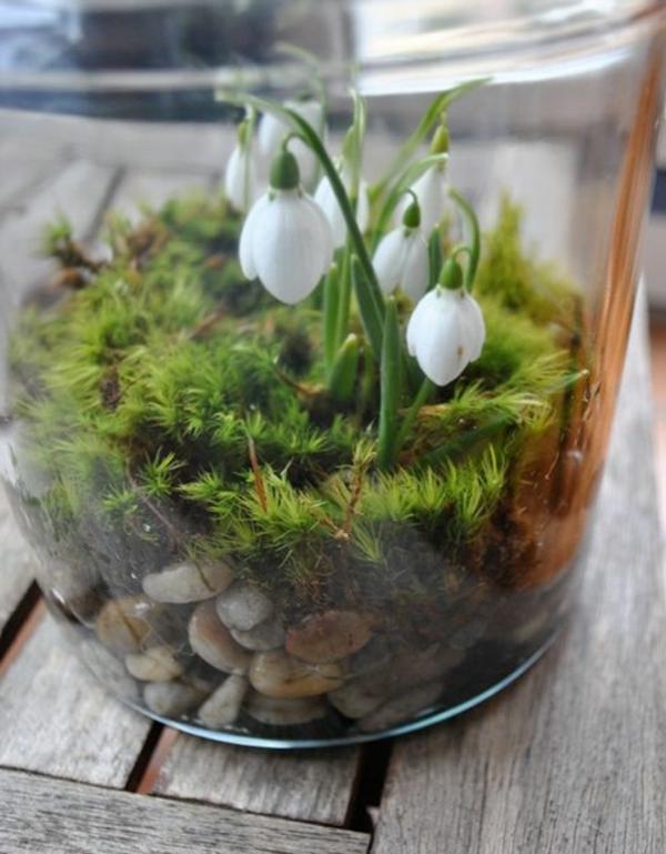 Schneeglckchen  die erste Blume des Jahres  Archzinenet