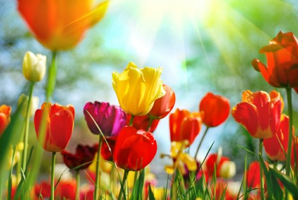 Frhlingsblumen  100 faszinierende Bilder   Archzinenet